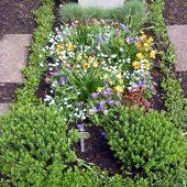 Frühlingsbepflanzung von einem Einzelgrab