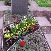Grabbepflanzung im Frühling