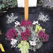 Urnengrab mit Herbstbepflanzung